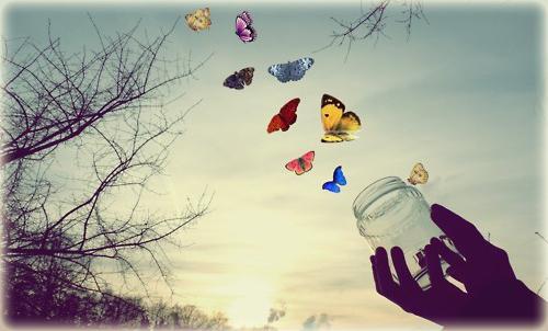 Farfalle corsi heal your life Chiara Robustellini